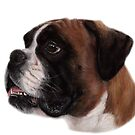 Boxer Pastel Drawing by Danguole Serstinskaja