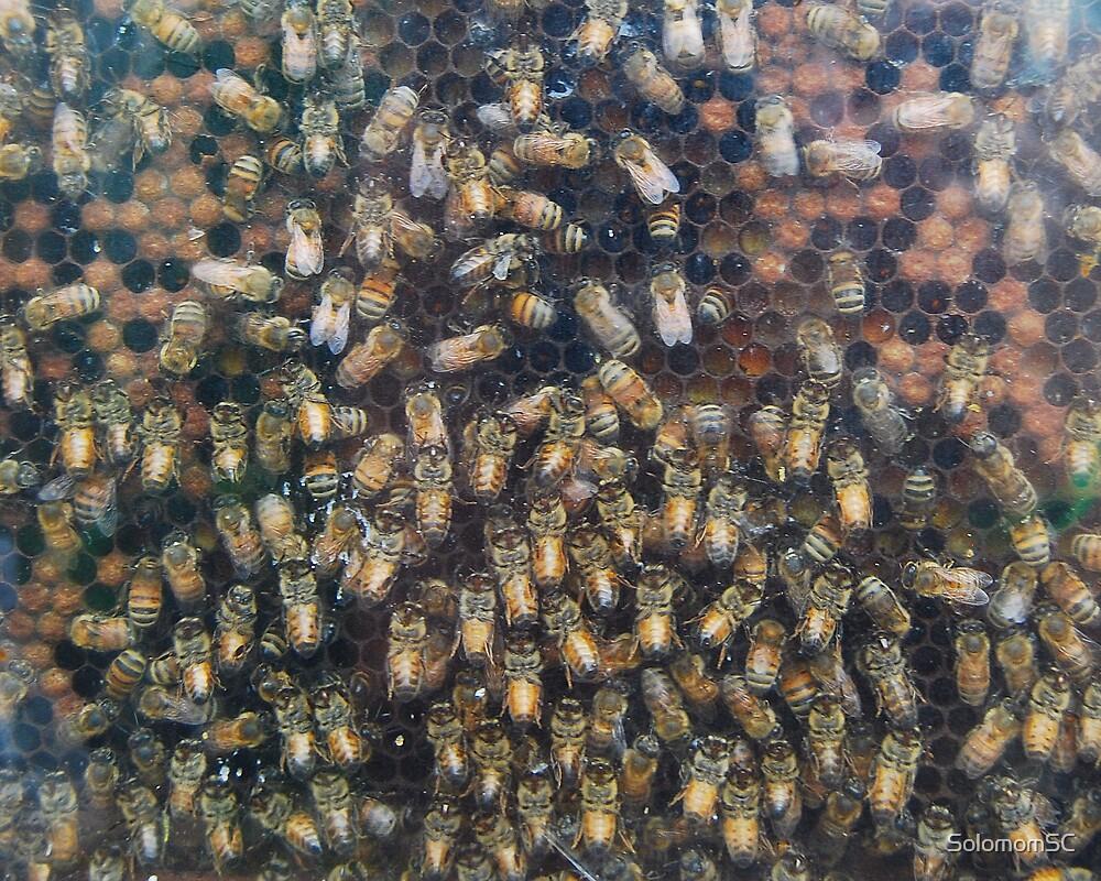 bee's mean Honey! by SolomomSC