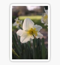 Garden adventure- Daffodil Sticker