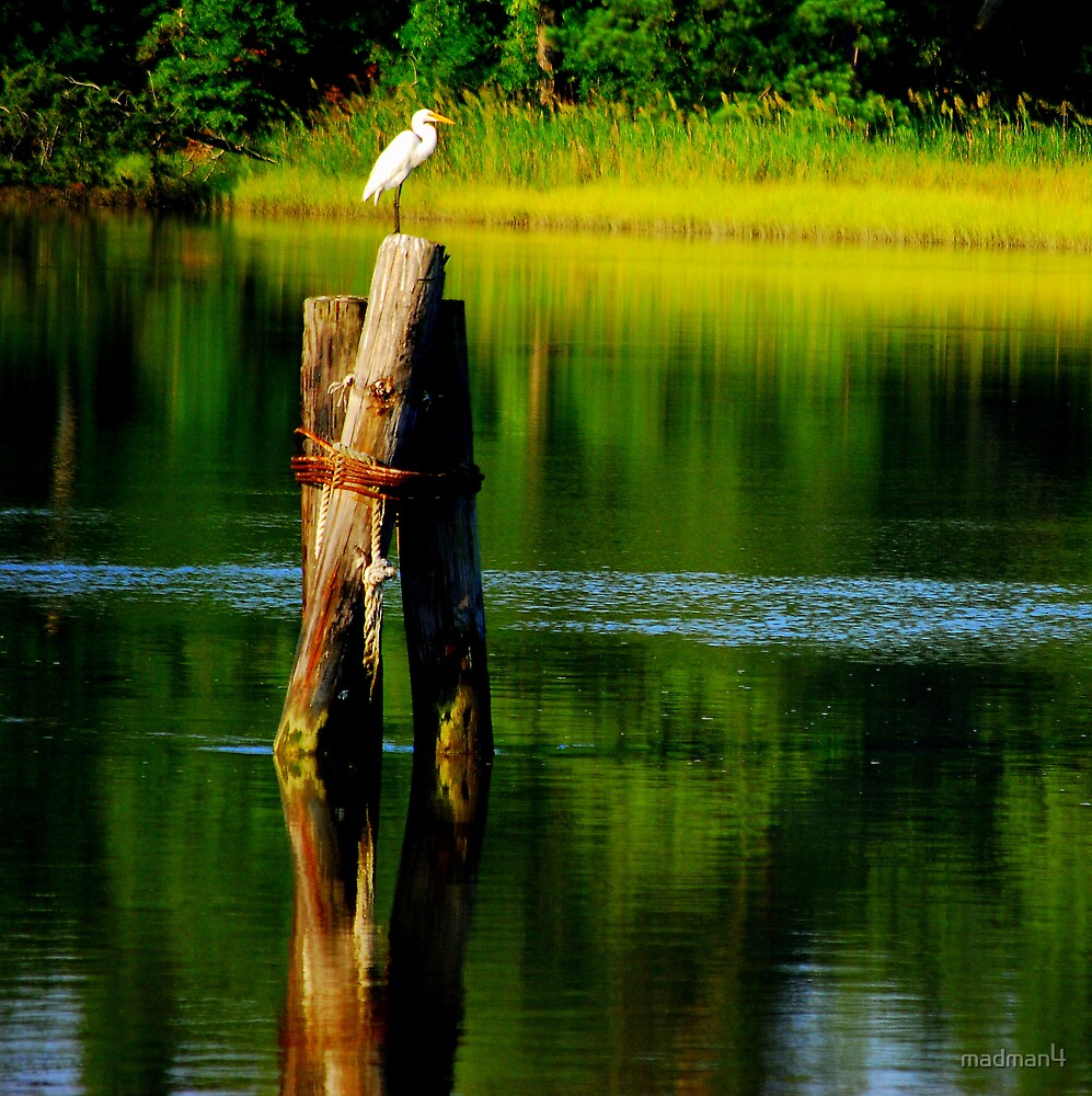 Egret On The Creek by madman4