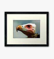 Ethel the Vulture 1 Framed Print