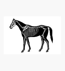 Horse silhouette with skeleton Photographic Print