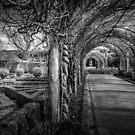 Alowyn Gardens by Christine Wilson