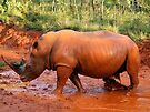 White Rhino mudbath at Entabeni Lodge by Ludwig Wagner