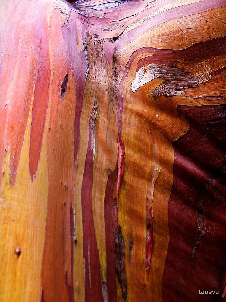 Natural Sculptor by taueva