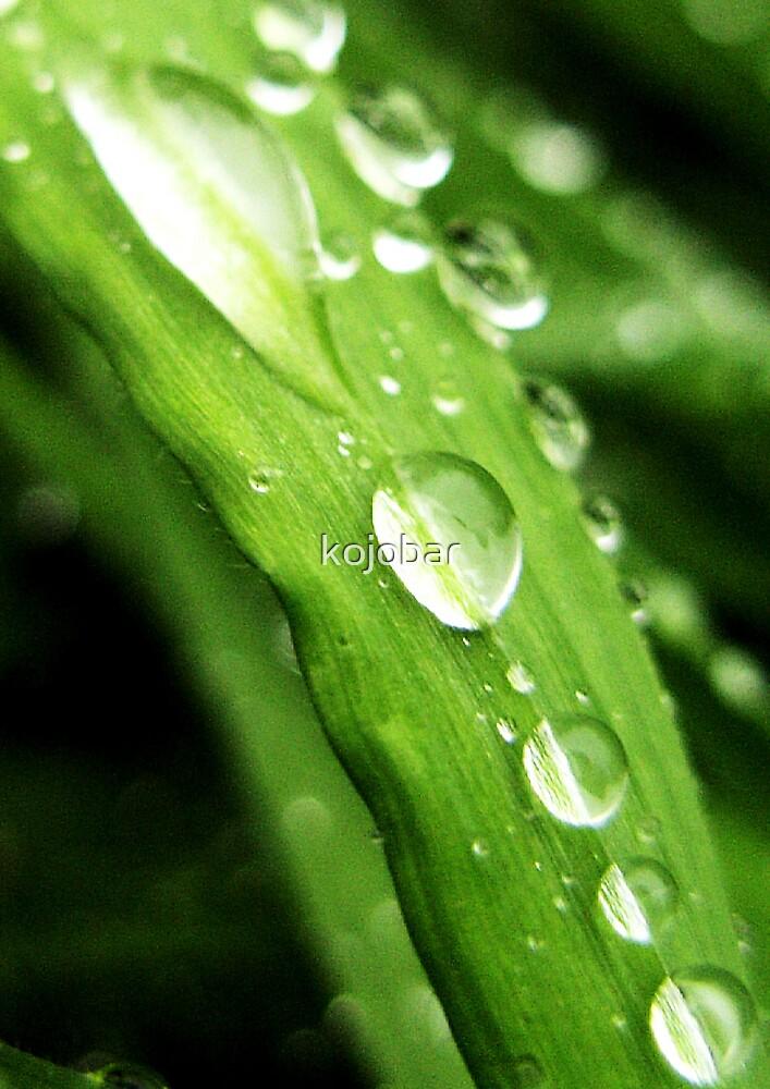 Dewdrops on Grass, BUDE, CORNWALL, ENGLAND by kojobar
