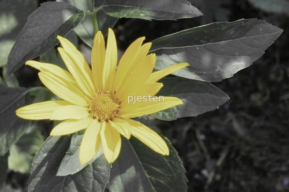 Yellow Flower by pjesten