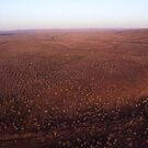 1000 Trees by helmutk