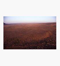 1000 Trees Photographic Print