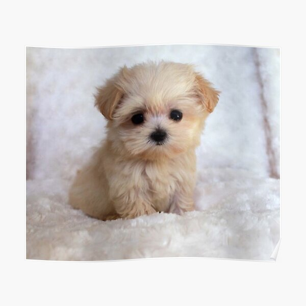 Cute Puppy Poster