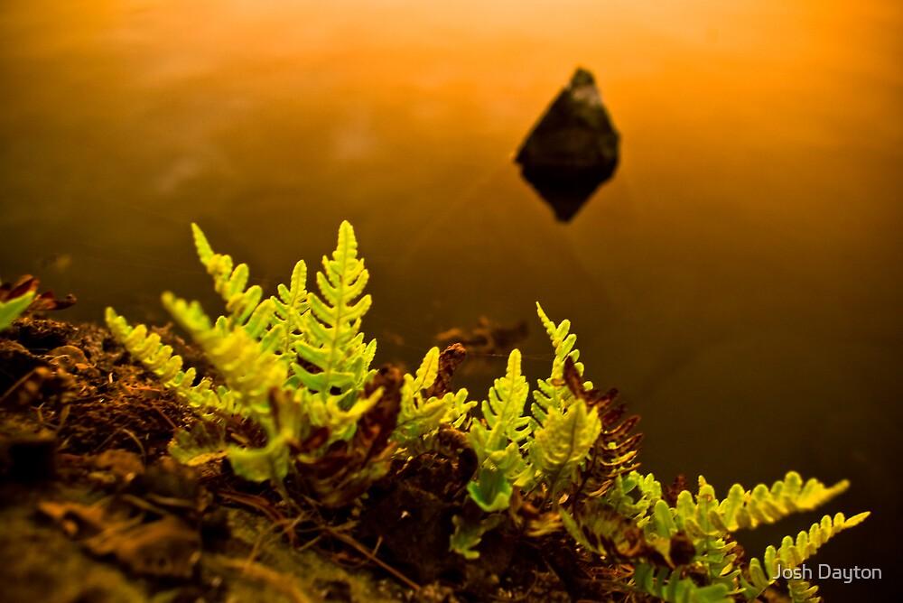 Sunset Fern by Josh Dayton
