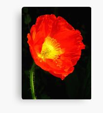 Stand Alone Poppy Canvas Print