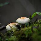 Mushroom by Nature Flicks