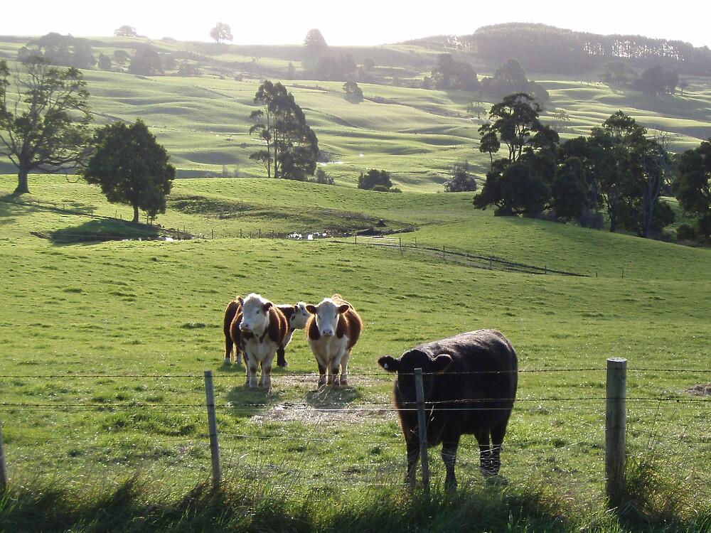 pastoral serenity in Tasmania by gaylene