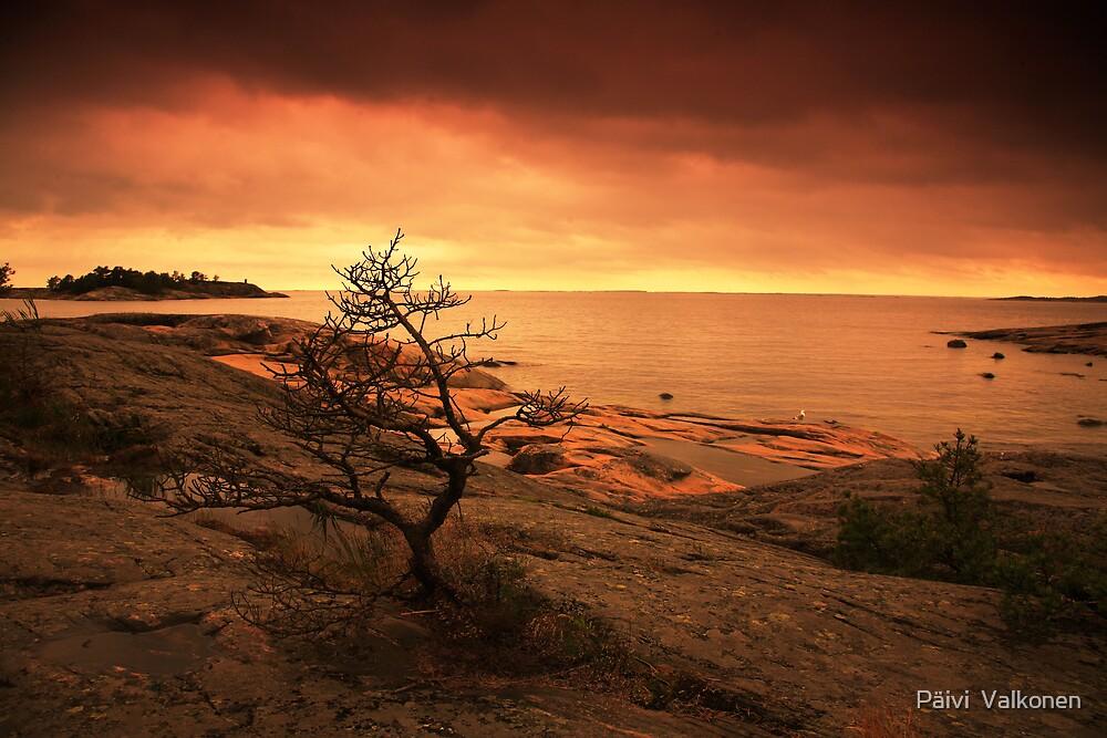 Orange evening light by Päivi  Valkonen