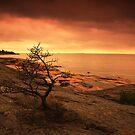 « Orange evening light » par Päivi  Valkonen
