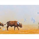 Contemporary South African Art by defineart