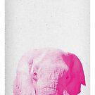 Elephant 02 von froileinjuno