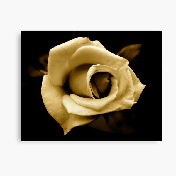 Rose by any other name... in sepia Canvas Print