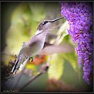 Ruby-throated Hummingbird Feeding on a Butterfly Bush by Deb  Badt-Covell