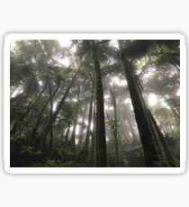 Tropical Forest Path - Foggy Forest Sticker