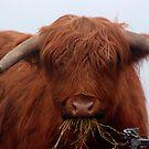 Freddy the Bull by Trevor Kersley