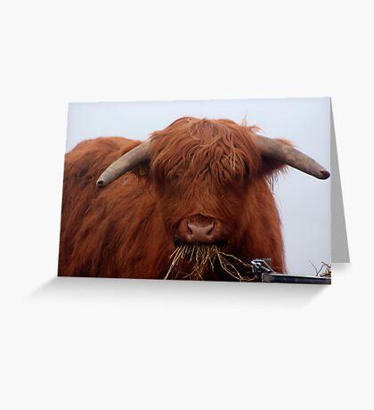 Freddy the Bull Greeting Card