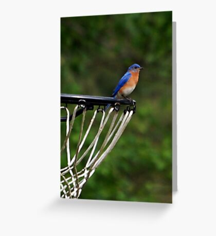 Hoops Anyone? Greeting Card