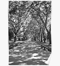 Urban Forest  Poster