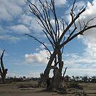 Desolation by lemontree