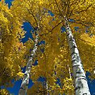 Aspens in Autumn, Rocky Mountain National Park by Gary Lengyel