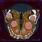 Spiral Butterfly I by Shira Chai