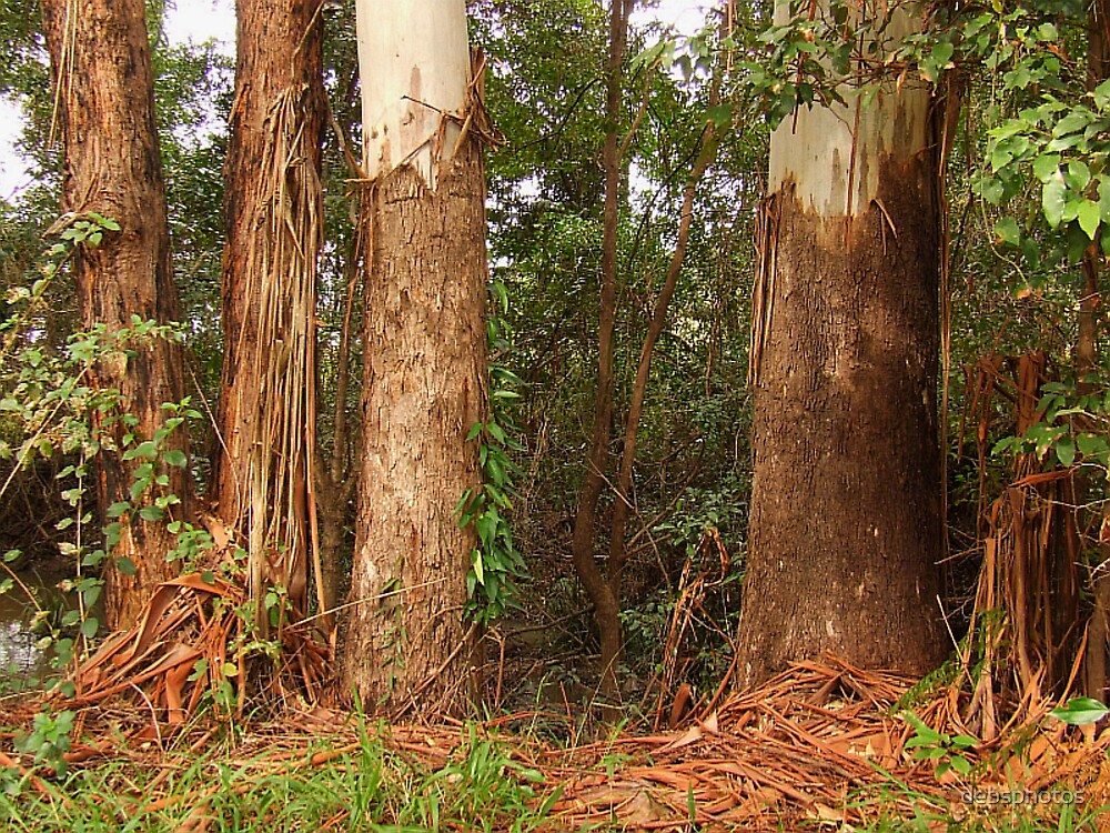 """""""Ribbon Gums"""" by debsphotos"""