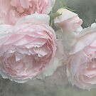 Englische Rose - English Rose Vintage - The Wedgewood Rose by Martina Cross