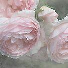 English Rose - English Rose Vintage - The Wedgewood Rose by Martina Cross