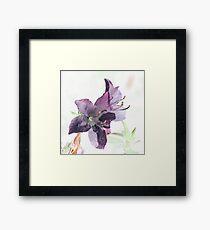 Azalea Framed Print