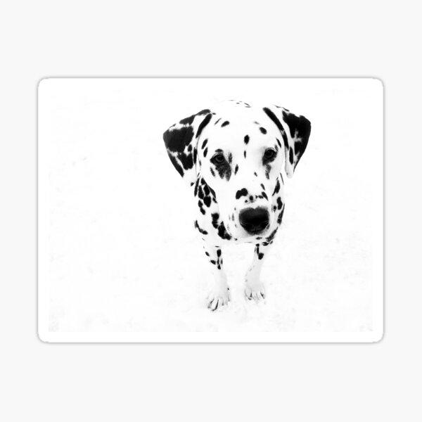 I'm a Dalmatian Sticker