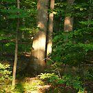 Forest Light by artgoddess