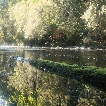 black river in the tarkine by phillip24