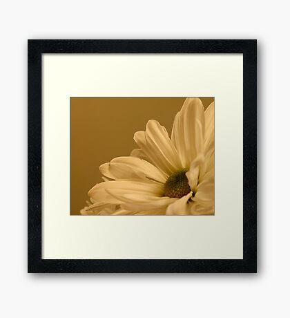 Daisy-Side Up Framed Print