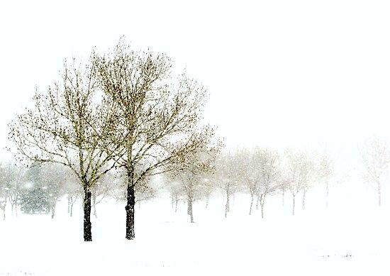 Spring Snowstorm by wwyz