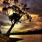River Redgum Sunset by Steve Chapple