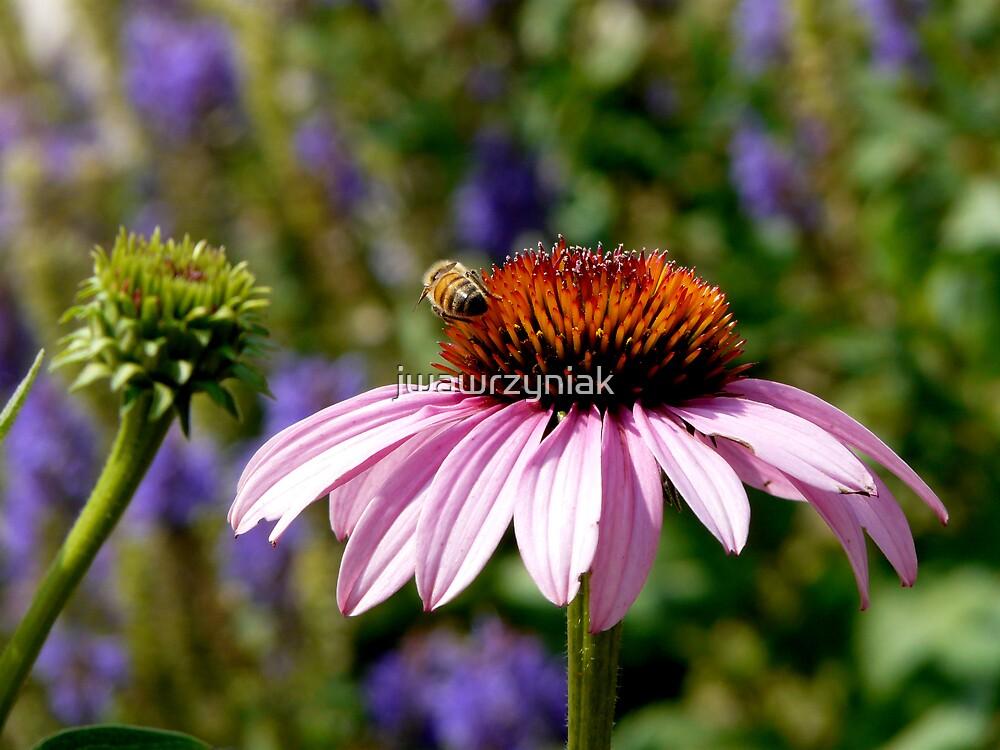 Busy Bee by jwawrzyniak