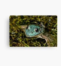 Green Frog (blue variant) Canvas Print