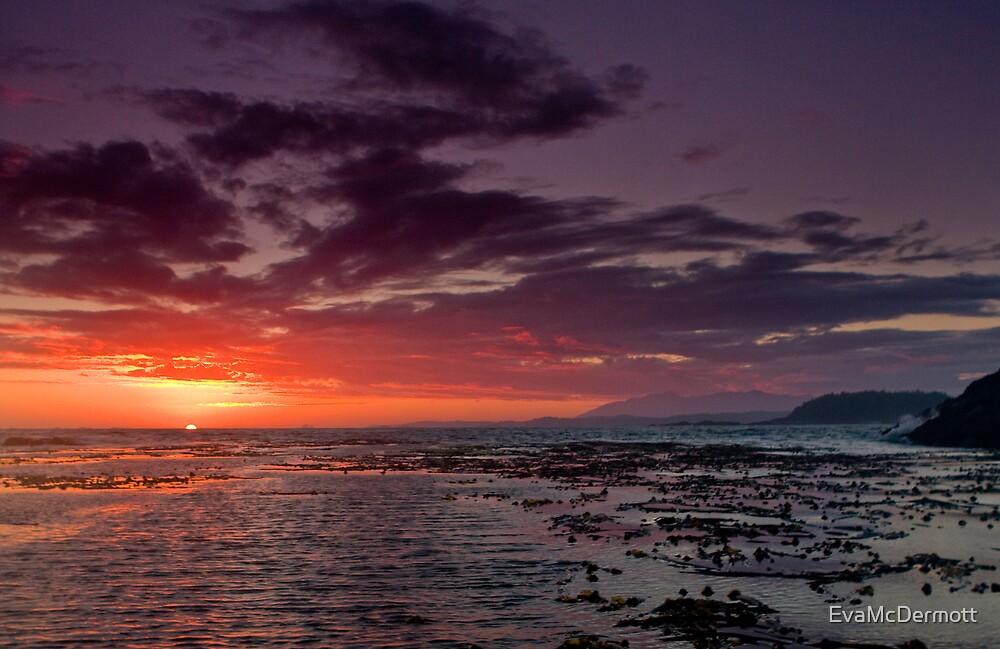 Kelp Forest Sunset by EvaMcDermott