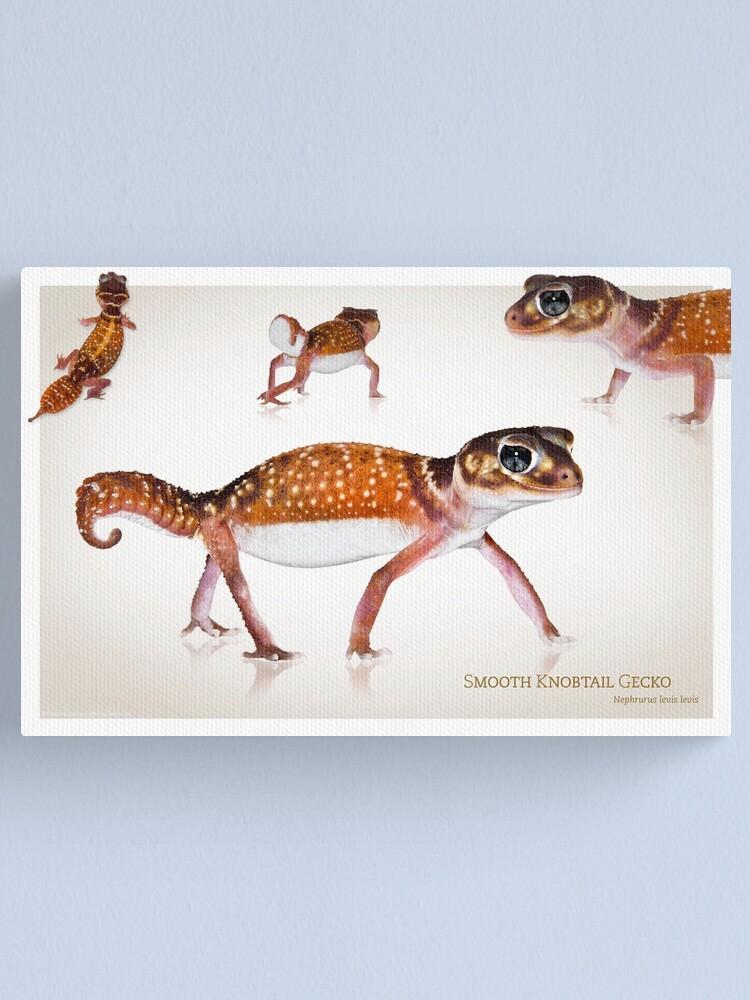 Alternate view of Smooth Knobtail Gecko [Nephrurus levis levis] Canvas Print
