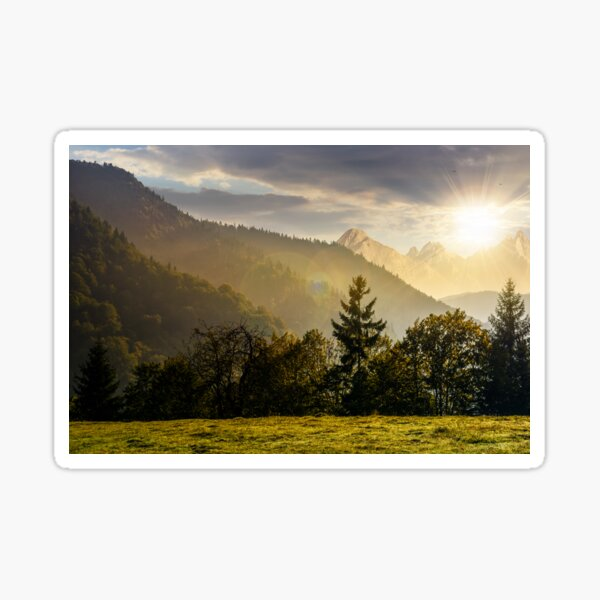 Forest on the hillside in High Tatras at sunset Sticker