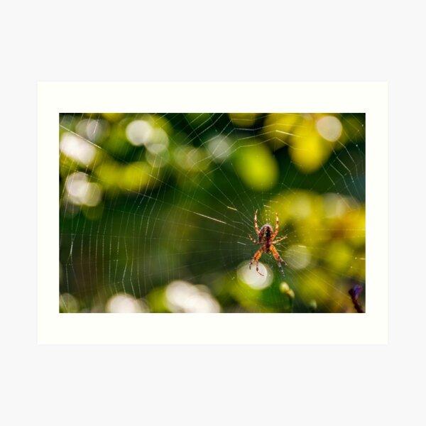 spider in the web on beautiful foliage bokeh Art Print