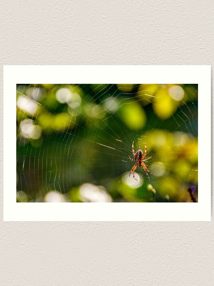 Alternate view of spider in the web on beautiful foliage bokeh Art Print