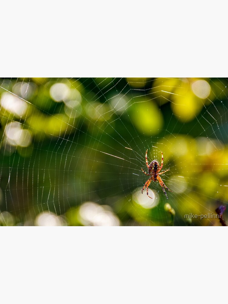 spider in the web on beautiful foliage bokeh by mike-pellinni